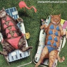 kitten, funny cats, pet, tan lines, suit