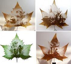 creativ, art project, leaf carv, art idea, beauti leaf, craft idea, leaf art, leafart, leaves