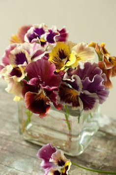 Simple vase of pansies