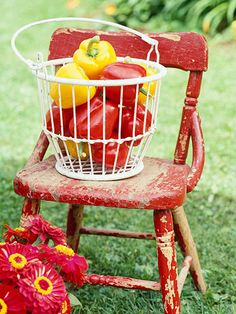 Chippy red chair, wire basket of red and yellow peppers and vibrant zinnias.