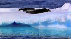 popper penguin, amaz video, one word, jd andrew, travel video