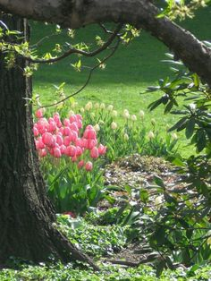 spring flowers, garden ideas, tree, yard, garden paths, bulb, gardens, place, pink tulip