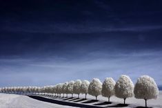 Trees in a row by Andy Silvers - Pixdaus
