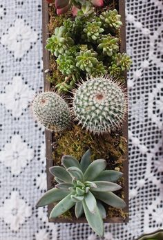 Cacti & Succulents: the ultimate low-maintenance plant collection