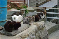 田代島の猫(宮城・石巻) Cats in Tashiro-jima Island, Ishinomaki, Miyagi, Japan