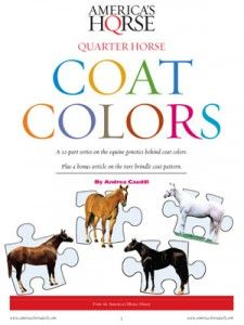 Get answers to all your coat color questions with AQHA's Quarter Horse Coat Colors report. This full-color, 20-page report is packed with easy-to-understand information about all 17 recognized colors. http://americashorsedaily.com/quarter-horse-coat-colors/