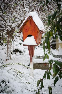 birdhouse covered in snow, .