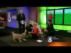 KTLA Sunday Edition Features The Pet Loo