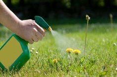 How to Kill Weeds Using Salt | DoItYourself.com Killing those weeds along the driveway..