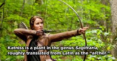 Katniss Everdeen - The Hunger Games | 17 Famous Characters With Hidden Meanings In Their Names