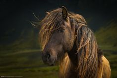 Photo Born To Be Wild by Anne Schneidersmann on 500px