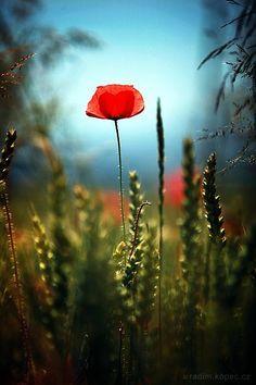 garden grow, plant, fleur de, flower foto, artfreel photograph