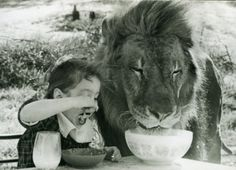 breakfast with the lion....