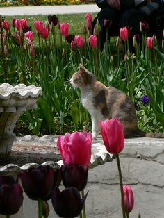 Calico at garden of Topkapı Palace