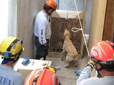Call for volunteers!  Would you like to help with a search canine testing and evaluation event October 18th and 19th at TEEX's Disaster City?  There are several shifts available. For more information and to register, please visit http://bit.ly/10ejfdE.  #TEEX   #USAR