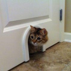 "DIY Laundry Room/Closet Litter Box ""Door"" - Cut a small opening on door to laundry room or closet & add some decorative trim. Love it!!"