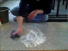 How to Clean Pet Vomit From Carpet - Remove Pet Stains From Carpet - Vinegar to Clean Carpet - YouTube