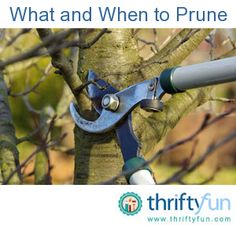 Gardening Pruning Primer: What and When to Prune