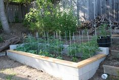 Cinder block garden with wooden edge