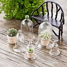 Mini Glass Cloche - trendy fairies