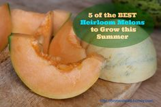 Five of the most delicious melons to grow this summer.   Homestead Honey