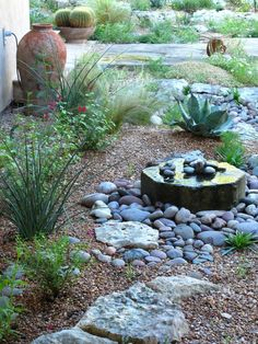 Red Yucca, Salvia greggii, Mexican feather grass and Whale's tongue agave.