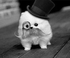 Omg pooor mustache puppy:O:_