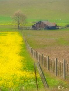 the West, in spring...fence marks line between plowed winter field and flowers in the pasture.