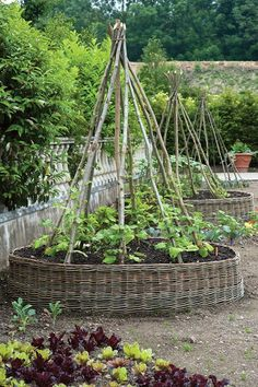 garden, round raised beds with tepee trellises.