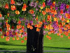 color, natur, trees, beauti tree, tulips, tulip tree, garden, beauti flower, british columbia