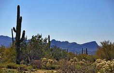 Del Webb at Dove Mountain | Active Adult Community Marana AZ | Del Webb homes