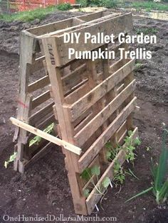 DIY pallet garden trellis for pumpkins or squash