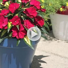 How fun! Paint your flower pots so you know they'll last: http://www.bhg.com/videos/m/85136344/painted-flower-pots-that-last.htm?socsrc=bhgpin080914paintedflowerpotsthatlast