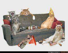Fiesta de gatos.