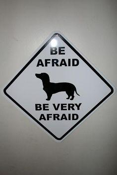 weenie dog funny, weenie dogs, doxi, dachshund, puppy weiner dogs