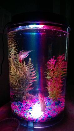 Betta fish on pinterest betta betta fish care and fish for Cylindrical fish tank
