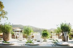 a table with herb centerpieces