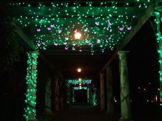 Hanging lights resemble the vines that grow here during the warmer months at  Holiday Lights.