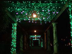 hanging lights, hang light, light resembl, vine, holiday lights