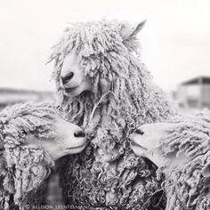 ❥ Three Sheep on Etsy