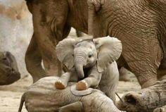 Cute little elephant!!