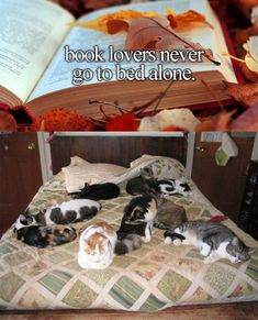 funny-book-lovers-cats-bed