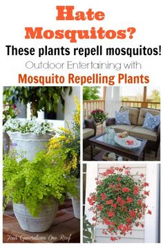 Decorating + entertaining with mosquito repelling plants