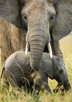 "Africa | ""Protective Mother"".  Masai Mara, Kenya |  ©Greg McMulin"