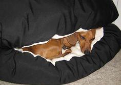 I just found my dog's Christmas present... every weiner dog needs a bun :)
