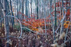 Autumn.. by -MRGT, via Flickr