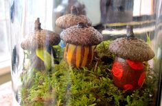 Acorn House Terrarium Craft. Natural acorn craft ideas.