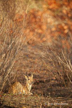 Taken in Masai Mara International Park, Kenya