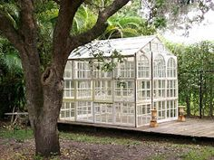 Recycled windows & doors comprise this garden green house!