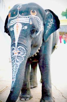 elephants, anim, paint eleph, art, inspir, india, beauti, photographi, thing